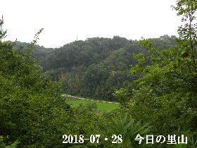 2018-07・28 今日の里山は・・・ (3).JPG