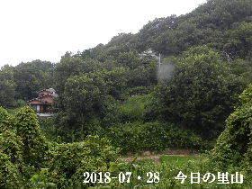 2018-07・28 今日の里山は・・・ (4).JPG