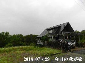 2018-07・29 今日の里山は・・・ (1).JPG