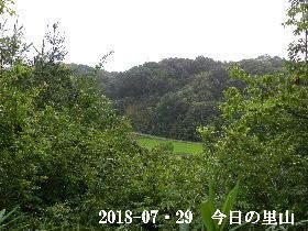 2018-07・29 今日の里山は・・・ (3).JPG