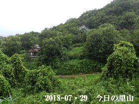 2018-07・29 今日の里山は・・・ (4).JPG