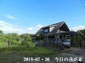 2018-07・30 今日の里山は・・・ (1).JPG