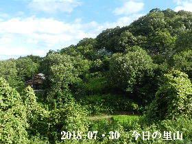 2018-07・30 今日の里山は・・・ (4).JPG