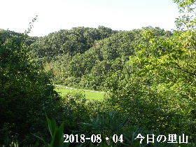 2018-08・04 今日の里山は・・・ (3).JPG