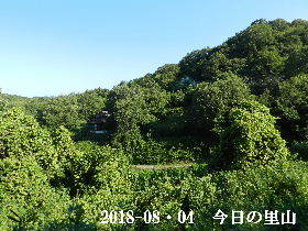 2018-08・04 今日の里山は・・・ (4).JPG