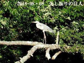 2018-08・08 今日の出遭い (4).JPG