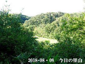 2018-08・08 今日の里山は・・・ (3).JPG