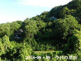 2018-08・08 今日の里山は・・・ (4).JPG