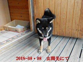 2018-08・08 今日の麻呂 (7).JPG
