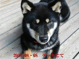 2018-08・08 今日の麻呂 (8).JPG