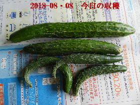 2018-08・08 我が家のスナップ・・・ (1).JPG
