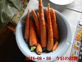 2018-08・08 我が家のスナップ・・・ (4).JPG