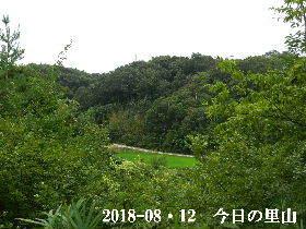 2018-08・12 今日の里山は・・・ (3).JPG