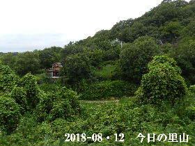 2018-08・12 今日の里山は・・・ (4).JPG