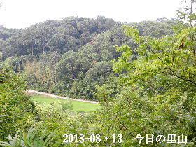 2018-08・13 今日の里山は・・・ (3).JPG