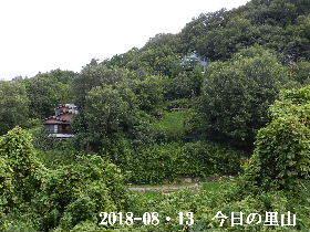 2018-08・13 今日の里山は・・・ (4).JPG