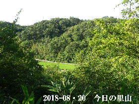 2018-08・20 今日の里山は・・・ (3).JPG
