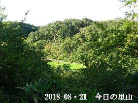 2018-08・21 今日の里山は・・・ (3).JPG