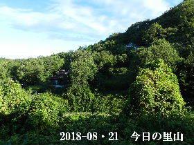 2018-08・21 今日の里山は・・・ (4).JPG