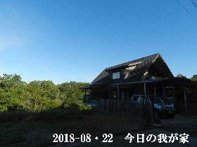 2018-08・22 今日の里山は・・・ (1).JPG