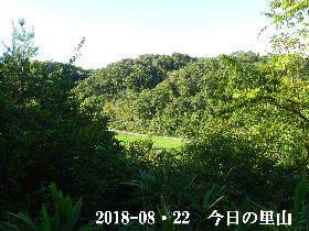 2018-08・22 今日の里山は・・・ (3).JPG