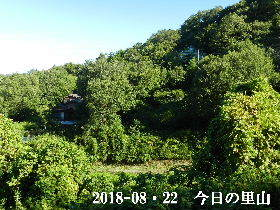 2018-08・22 今日の里山は・・・ (4).JPG