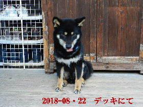 2018-08・22 今日の麻呂 (5).JPG