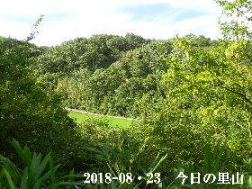2018-08・23 今日の里山は・・・ (3).JPG