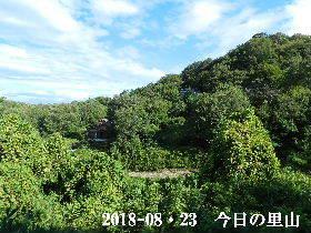 2018-08・23 今日の里山は・・・ (4).JPG