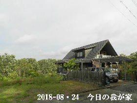 2018-08・24 今日の里山 (1).JPG