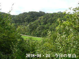 2018-08・24 今日の里山 (3).JPG