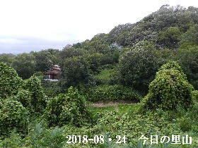 2018-08・24 今日の里山 (4).JPG