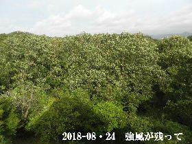 2018-08・24 今日の里山 (5).JPG