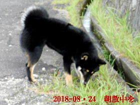 2018-08・24 今日の麻呂 (1).JPG