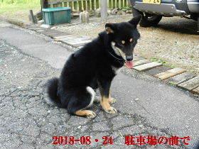 2018-08・24 今日の麻呂 (6).JPG