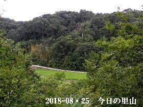 2018-08・25 今日の里山は・・・ (3).JPG