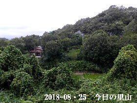 2018-08・25 今日の里山は・・・ (4).JPG