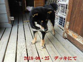 2018-08・25 今日の麻呂 (8).JPG