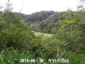 2018-08・26 今日の里山は・・・ (3).JPG