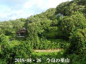 2018-08・26 今日の里山は・・・ (4).JPG