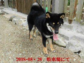 2018-08・26 今日の麻呂 (4).JPG