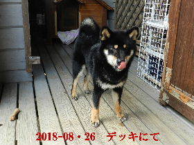 2018-08・26 今日の麻呂 (7).JPG