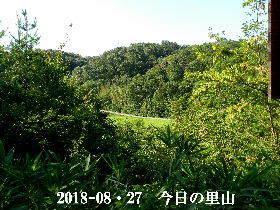 2018-08・27 今日の里山は・・・ (3).JPG