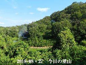 2018-08・27 今日の里山は・・・ (4).JPG