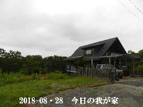 2018-08・28 今日の里山は・・・ (1).JPG