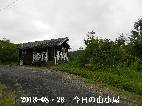 2018-08・28 今日の里山は・・・ (2).JPG