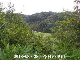 2018-08・28 今日の里山は・・・ (3).JPG