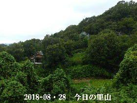 2018-08・28 今日の里山は・・・ (4).JPG