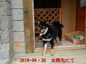 2018-08・28 今日の麻呂 (13).JPG