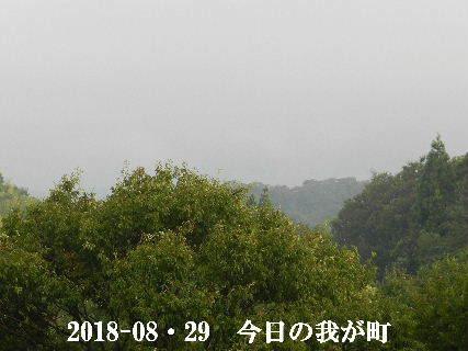 2018-08・29 今日の我が町.JPG